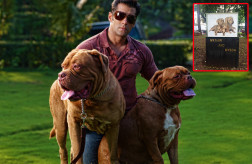 What a perk for being Salman Khan's pets!